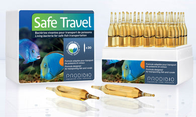 Safe Travel - freakincorals.com
