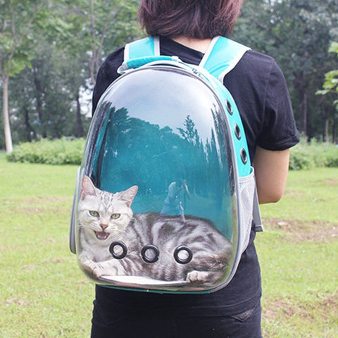 Traveling with a Cat in Backpack