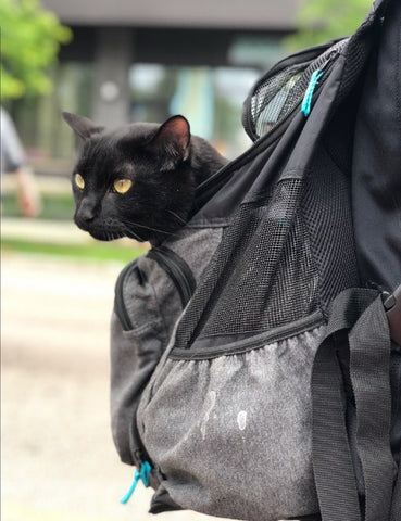 Cat Sitting in Cat Backpack