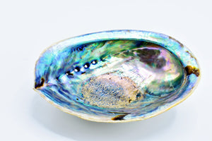 "5""-6"" Abalone Shell w/ wooden stand - Kulcha Kernel"