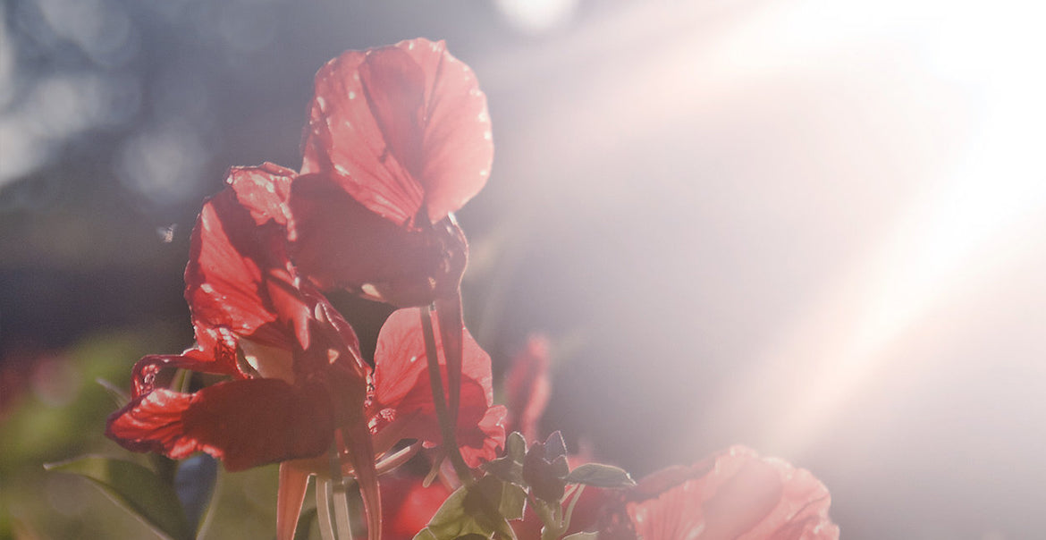 Remembrance Day: What are really remembering?