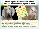 Animal Rights Lesson