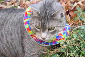 Birdsbesafe® Cat Collar Covers and Your Cats