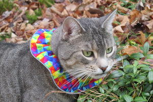 Emmy outdoors with Birdsbesafe cat collar cover