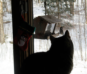 Bird Safety around Bird Feeders