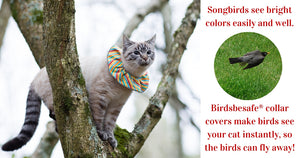 We help birds be safe from cats