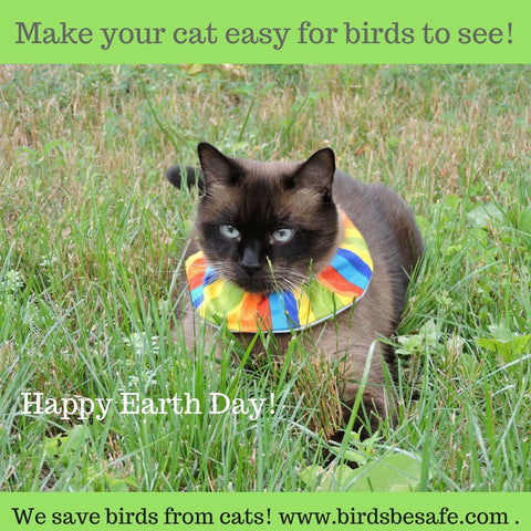 Paco the cat for Birdsbesafe, saving birds from cats, Earth Day 2017
