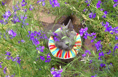 Lou Not Hiding in Purple Flowers with Birdsbesafe