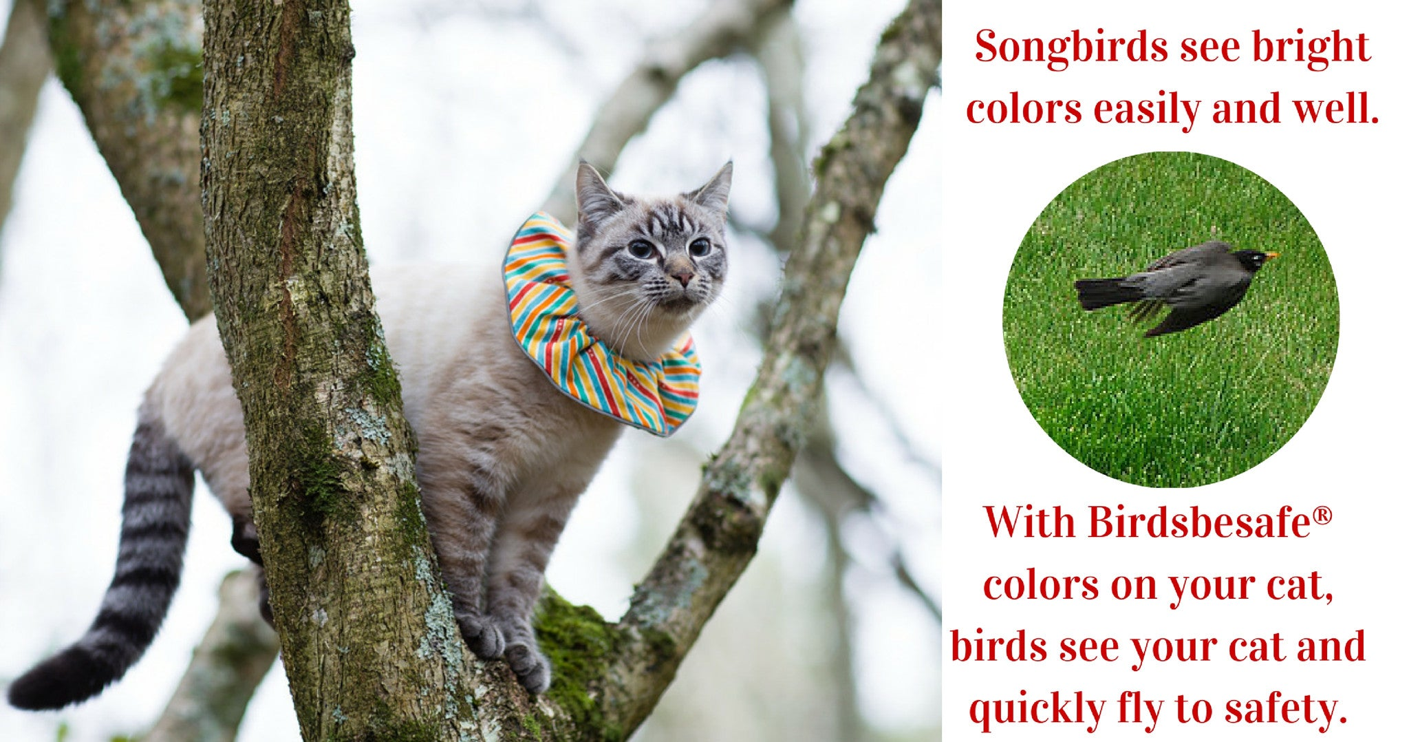 Copyright Birdsbesafe LLC; Photo by Harry Duns;Birdsbesafe cat collar covers explained