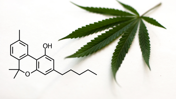 CBN: The Secret Cannabinoid You Want In Your Wellness Routine