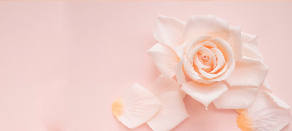Soft pink rose on light background