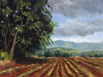 Landscape painting of a farm, a big mango tree and distant mountains during rainy season.