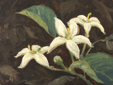 Oil painting of white wild flowers, blooming during Indian summer.