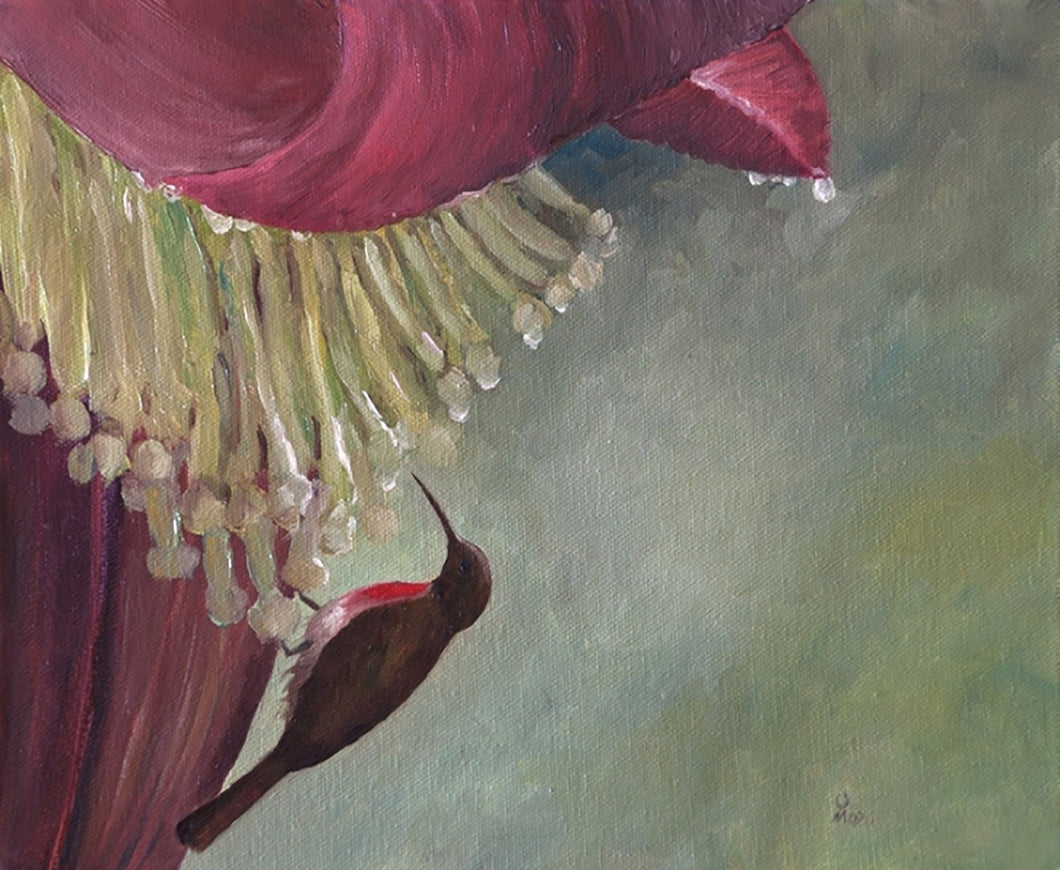 Oil Painting showing a bird with long beak taking nector out showing banana flowers.