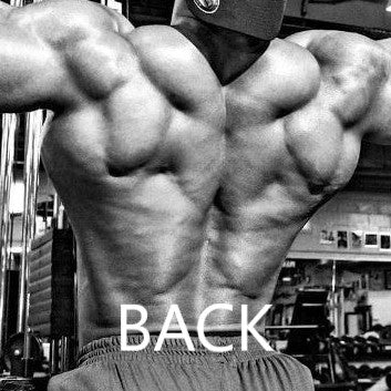 Beginners Back workout