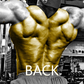 High Intensity Back Workout