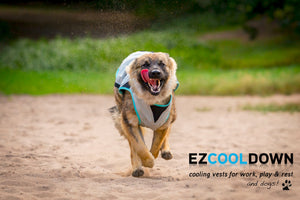 Dry Cooling Vest for Dogs