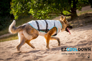 Suitical DRY Cooling Vest for Dogs