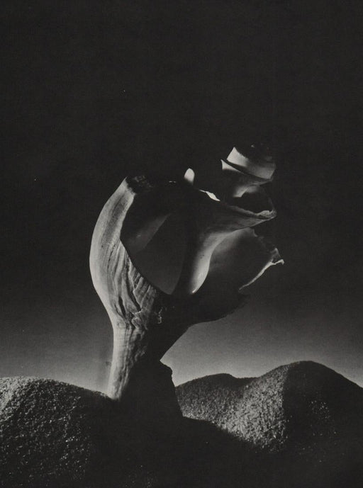 RUTH BERNHARD - Broken Shell, 1934