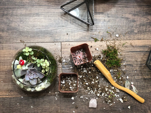 Terrarium Succulent Garden Workshop - Jan 11, 2020 @ 5 P.M.