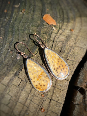 Petrified Palm Wood Fossil Earrings with Peacock Feather