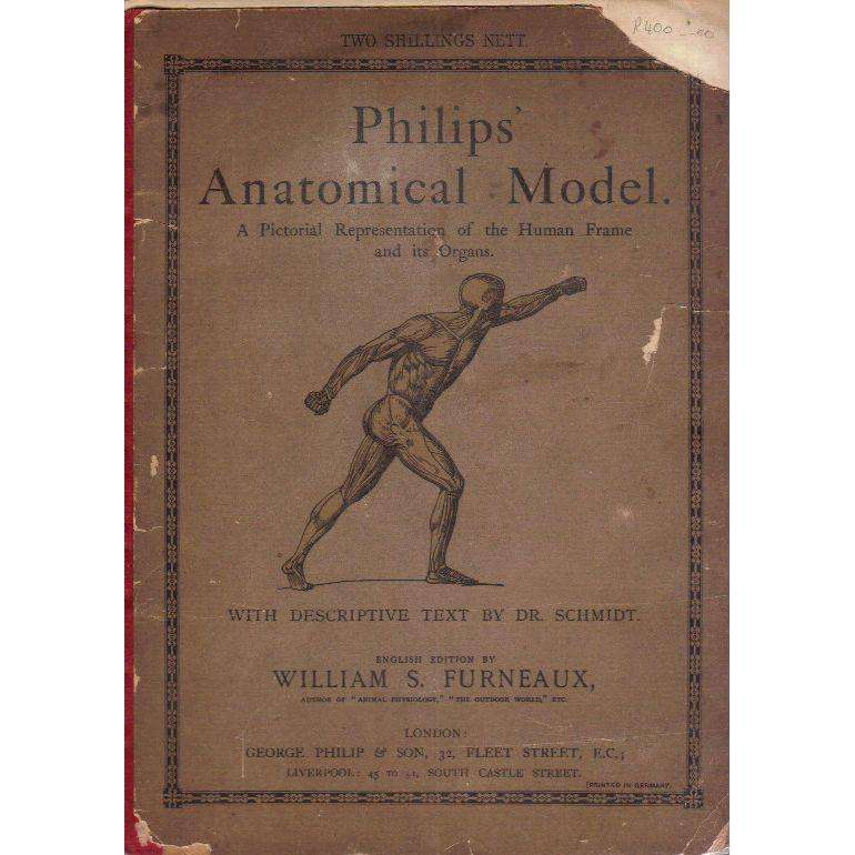 Bookdealers:Philips' Anatomical Model: A Pictorial Representations of the Human Frame and its Organs | William S. Furneaux