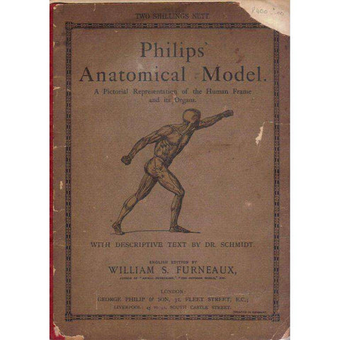 Philips' Anatomical Model: A Pictorial Representations of the Human Frame and its Organs | William S. Furneaux