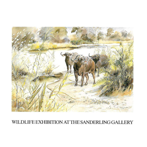 Wildlife Exhibition at the Sanderling Gallery (Invitation to the Exhibition)