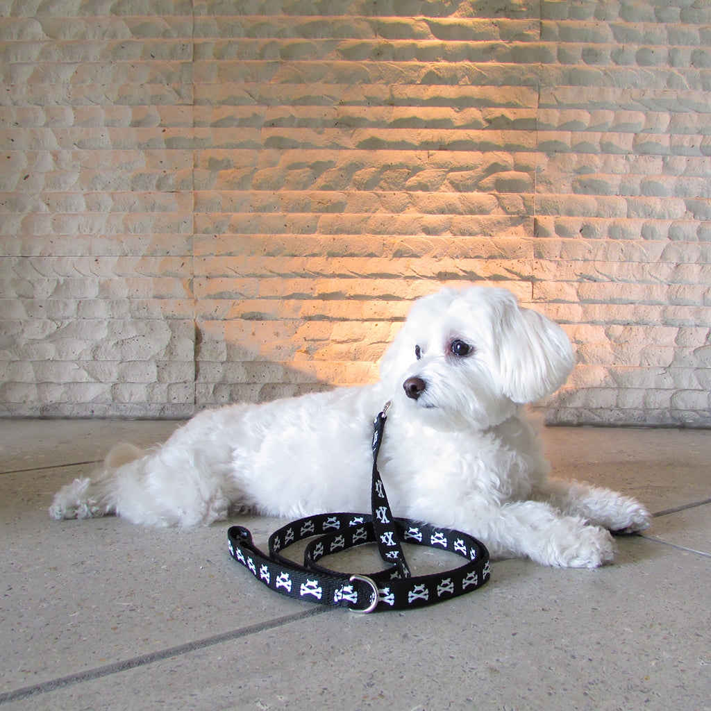 Wagberry Dog And Crossbones Leash And Collar