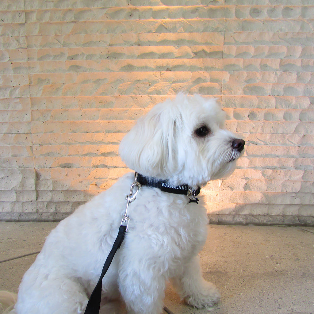 Wagberry Heritage Leash And Collar