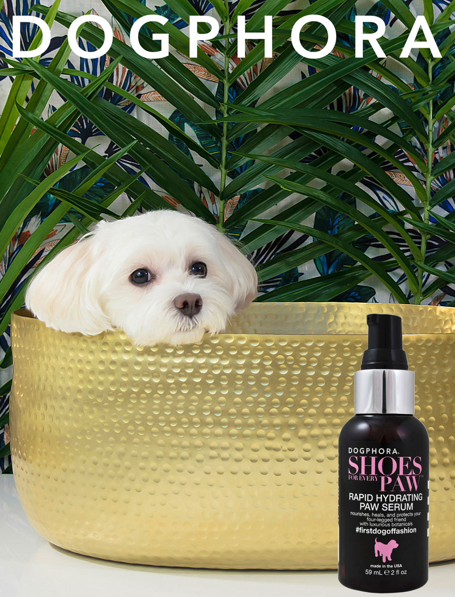 Dogphora Shoes For Every Paw Serum