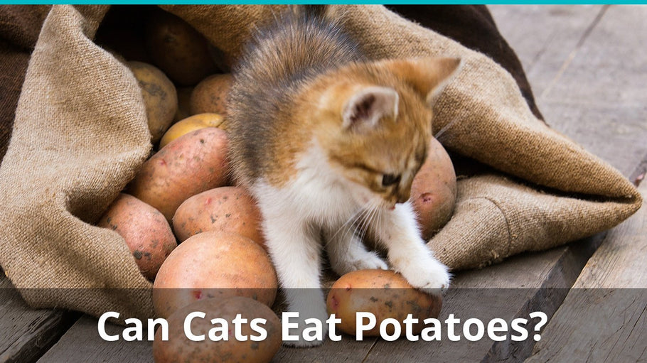 Can Cats Eat Potatoes | Are Potatoes Ok To Feed To A Cat?