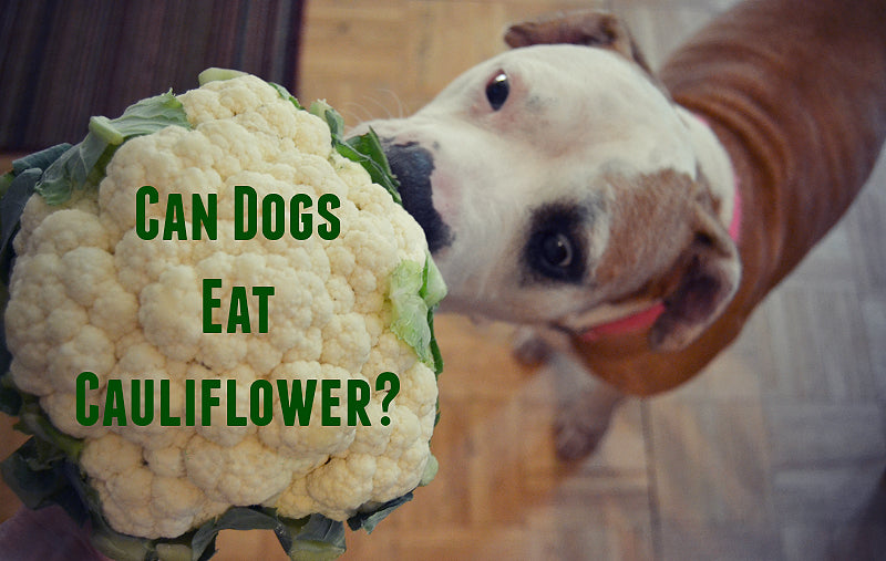 Can Dogs Eat Cauliflower | Is It OK For My Dog To Eat Cauliflower?