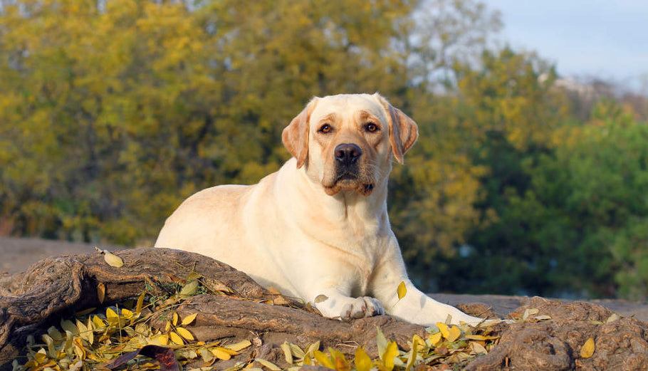 How to Help Your Dog Lose Weight | Professional Dog Diet Tips