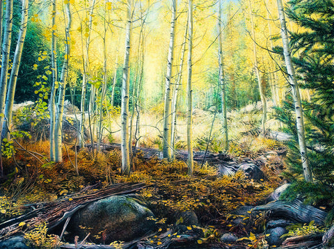 Colorado aspen tree forest oil on canvas painting by fine artist Thane Gorek