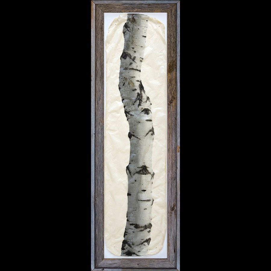 Aspen tree on gampi paper in recycled barnwood frame by artist Pete Zaluzec