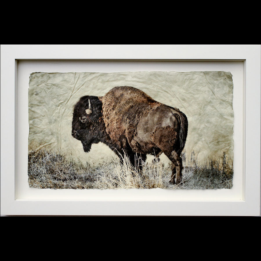 Bison photo printed on gampi in white frame created by artist Pete Zaluzec