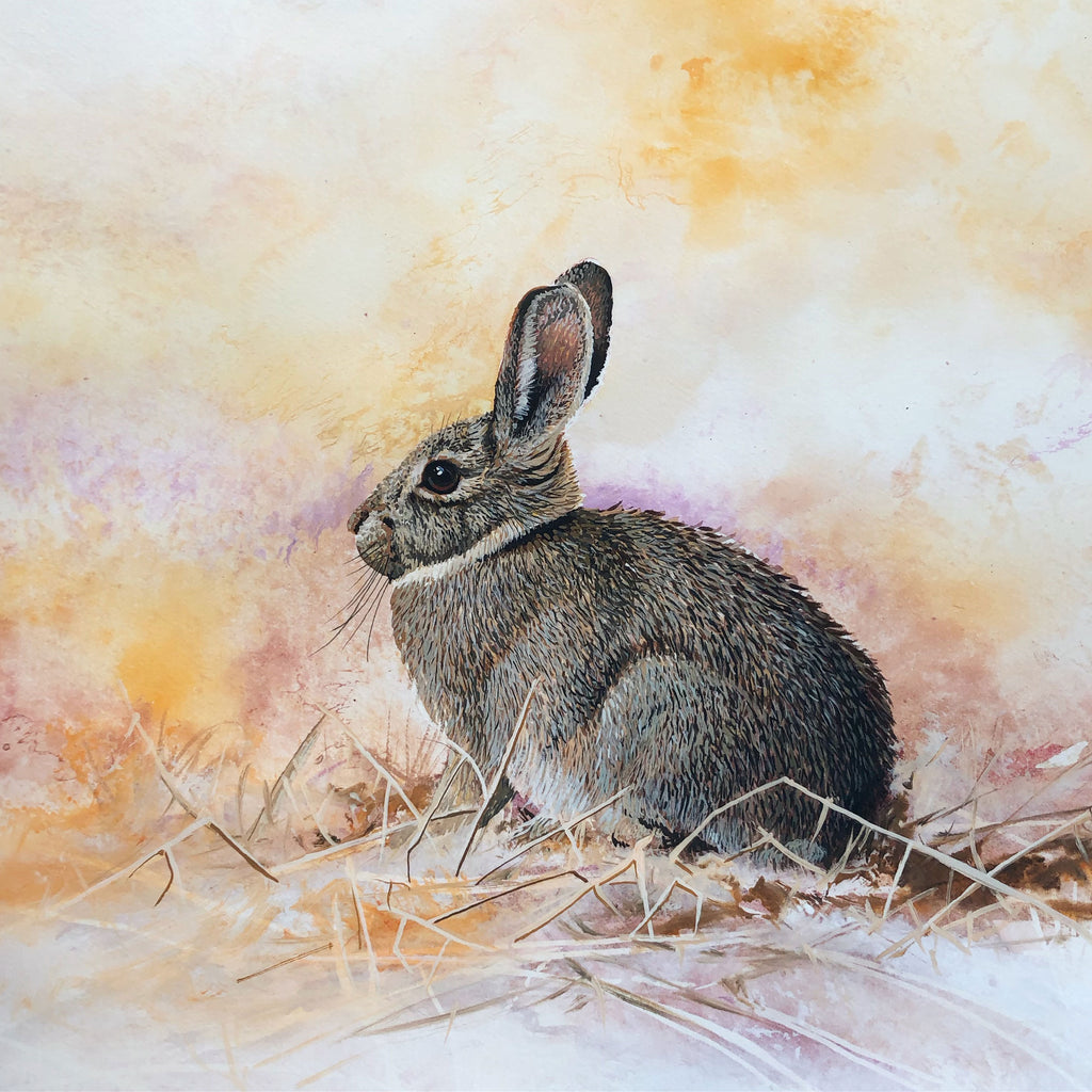 Breaking Cover original wildlife bunny watercolor painting by Colorado Springs artist Maxine Bone