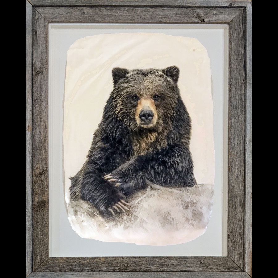 Pete Zaluzec Original Original Gampi Wildlife Photograph of Bear: Bruno's Poker Face