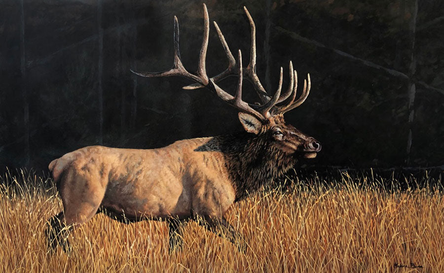 Fields of Gold original oil on canvas wildlife elk painting by Colorado Springs artist Maxine Bone