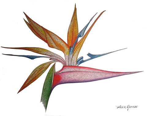 Flowers of Paradise Giclee