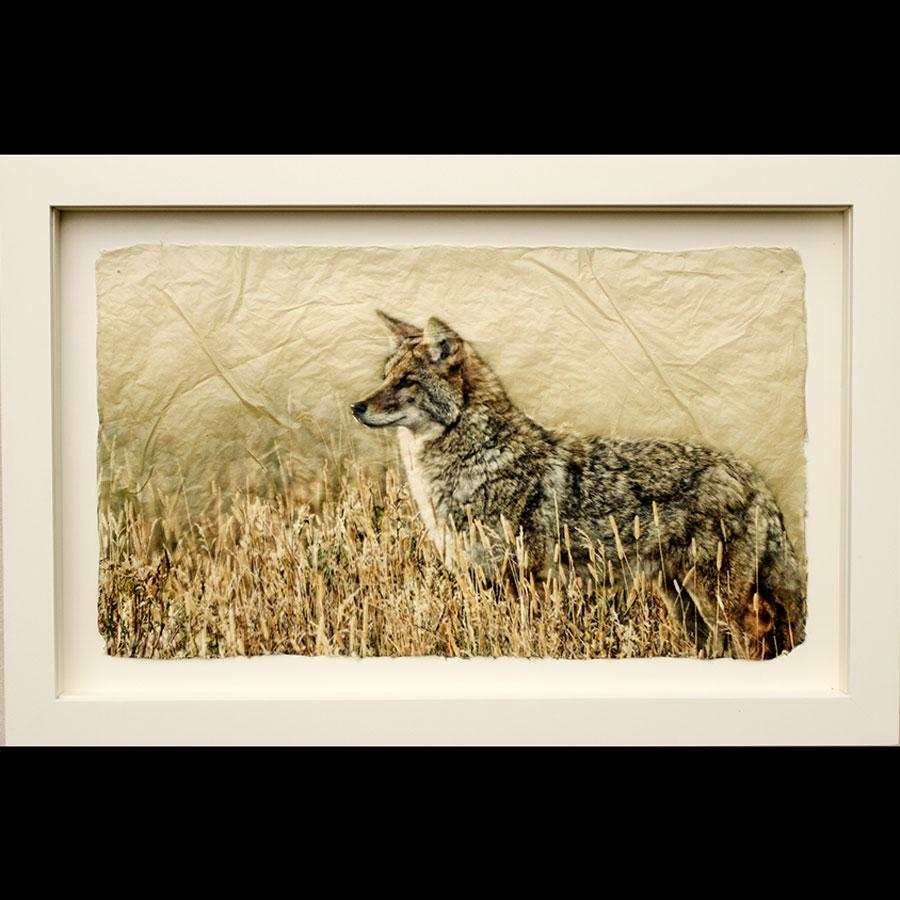 God's Dog photo printed on gampi in white frame created by artist Pete Zaluzec