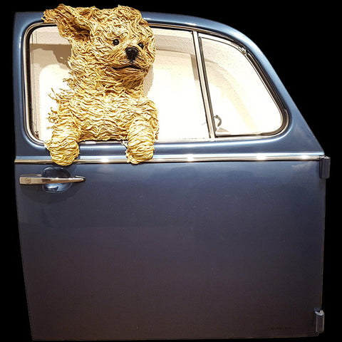 Golden-Doodle in a Blue VW Door
