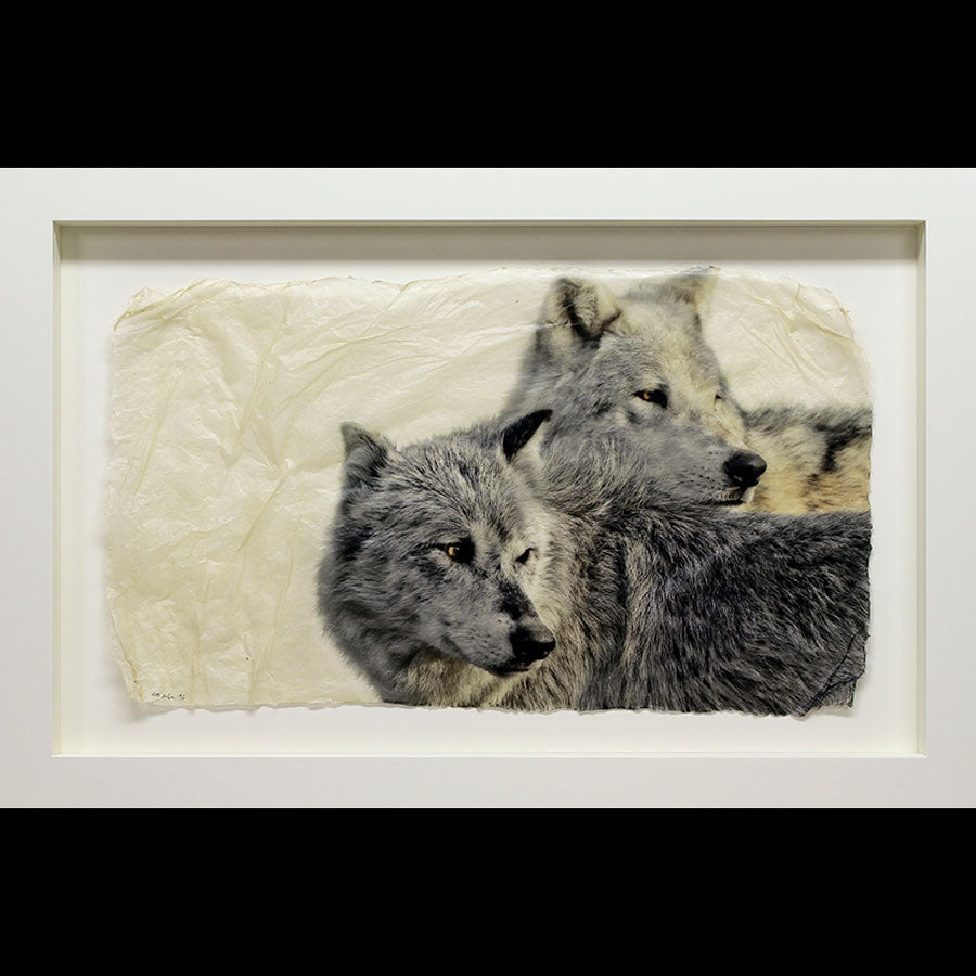 Last Look back two wolves wildlife gampi print by artist Pete Zaluzec