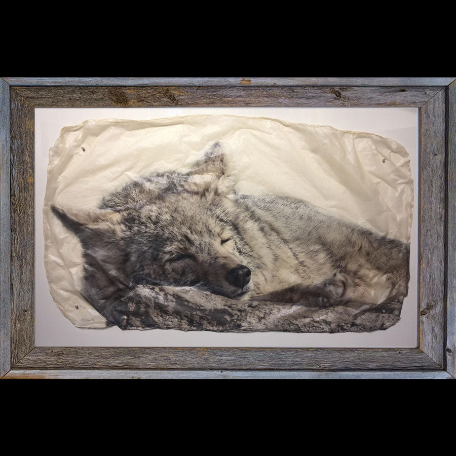 Snooze sleeping wolf wildlife photo gampi print by artist Pete Zaluzec in barnwood frame