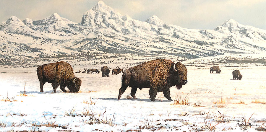 The Open Plains original oil on canvas winter landscape with wild bison by Colorado artist Maxine Bone