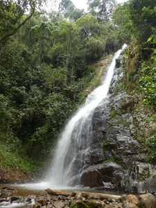 Ecotour to waterfall 'the Queen' (all-included) - Biodiverse Development