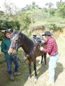 Ecotour by horse (including lunch) - Biodiverse Development