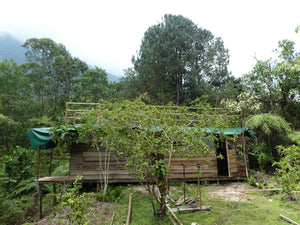 Triple room cabin with roof terrace - Biodiverse Development