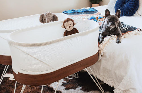 12 Paw-Some Ways to Announce Your Pregnancy With Your Dog